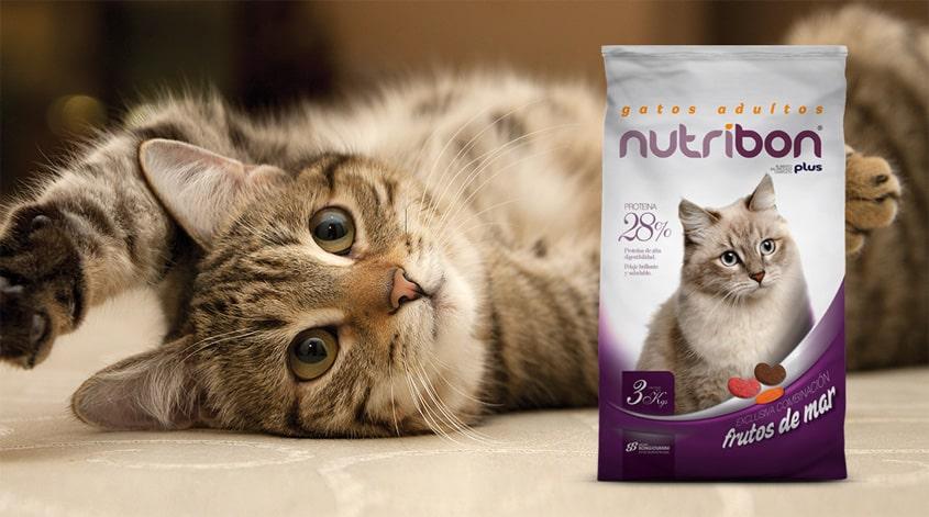 nutribon gatos adultos paraiso de mascotas forrajeria parana