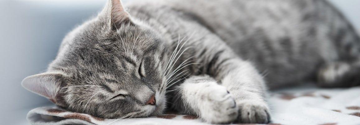 paraiso de mascotas forrajeria parana agility alimento urinario