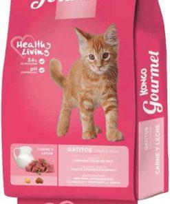 kongo gatitos paraiso de mascotas