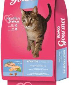 kongo gatos paraiso de mascotas