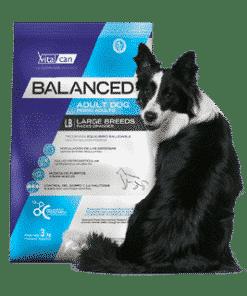 Balanced Perro Adulto Raza Grande