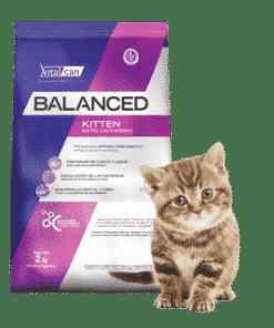 balanced kitten