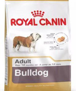 bulldog ingles 12kg paraiso d emascotas parana