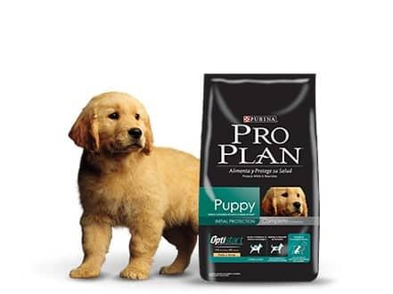 Pro plan cachorro raza mediana