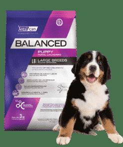 balanced cachorro raza grande