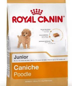 caniche junior poodle paraiso de mascotas parana