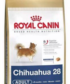 chihuahua adulto paraiso de mascotas
