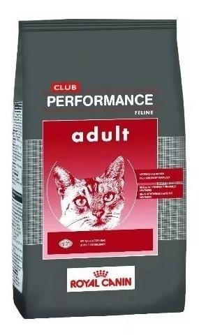 performance gatos paraiso de mascotas parana