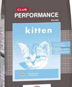 performance kitten paraiso de mascotas parana