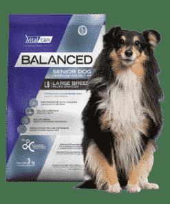 Balanced Perro Senior Raza Grande