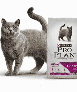 Pro plan gato urinary