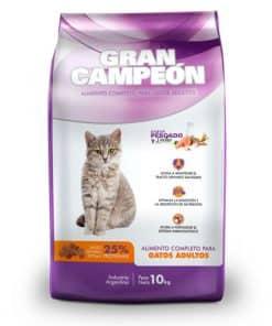 gran campeon gato