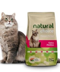 natural choice gatos adultos